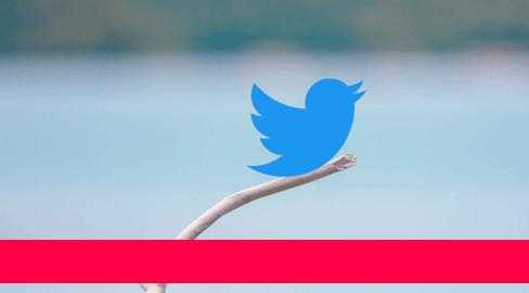 Was bringt eigentlich Twitter?